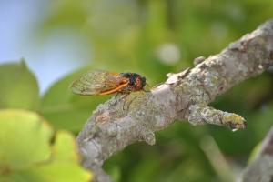 cicada/branch/2014